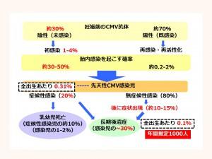 日本におけるCMV抗体検査陽性と症候性の確率のかかわり
