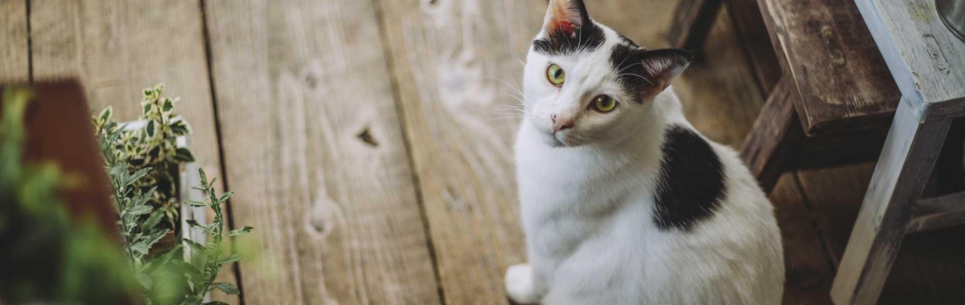 猫とトキソプラズマ